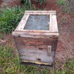 Colônia de abelhas da espécie Apis mellifera L. preparada para migração com tela de transporte e alvado tampado