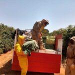 Descarregamento de colônias de abelhas da espécie Apis mellifera L. em lavoura de café arábica (Coffea arabica) para o Serviço de Polinização Agrobee, Varginha-MG, Setembro-2020-6